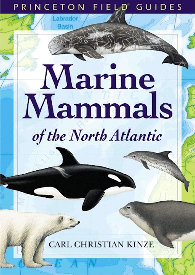 Marine Mammals of the North Atlantic