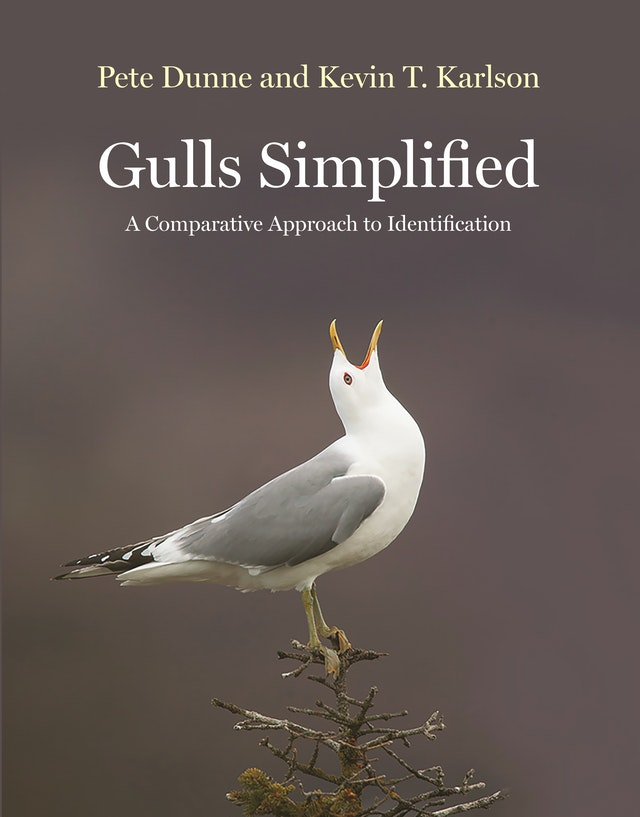 Gulls Simplified