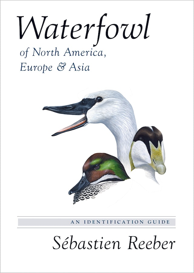 Waterfowl of North America, Europe, and Asia