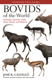 Bovids of the World