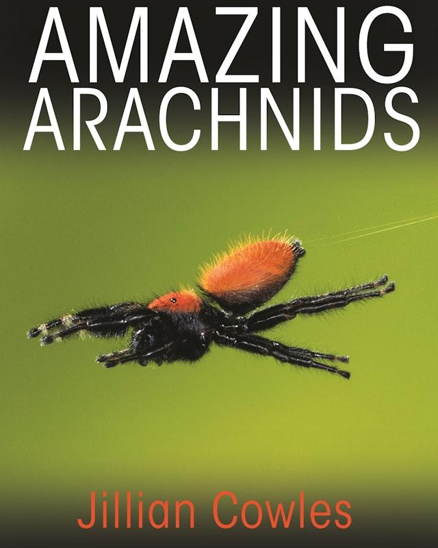 Amazing Arachnids