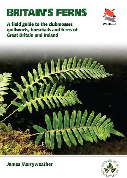 Britain's Ferns
