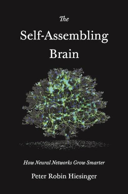 The Self-Assembling Brain