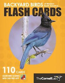 Backyard Birds Flash Cards - Western North America