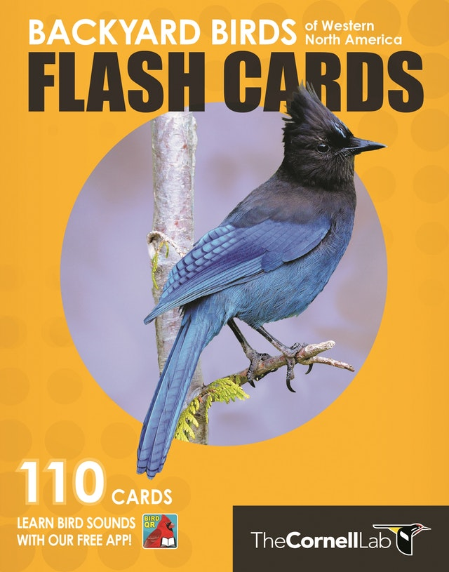 Backyard Birds Flash Cards - Western North America