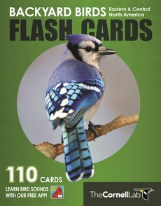 Backyard Birds Flash Cards - Eastern & Central North America