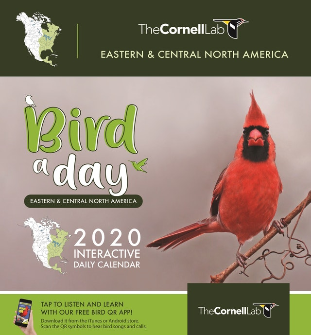 Bird a Day 2020 Interactive Daily Calendar Eastern & Central North America