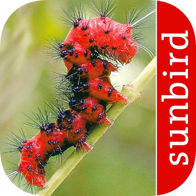 Caterpillars of Eastern North America (App)