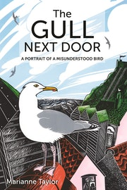 The Gull Next Door