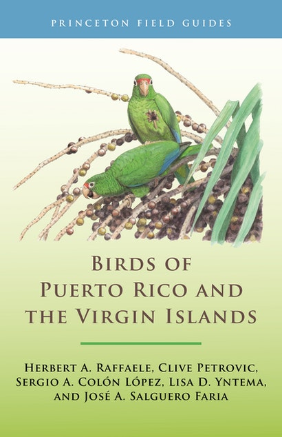 Birds of Puerto Rico and the Virgin Islands