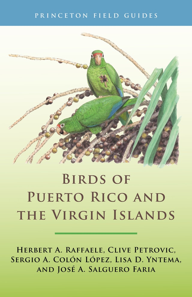 Birds of Puerto Rico and the Virgin Islands