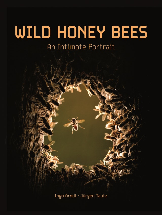 Wild Honey Bees