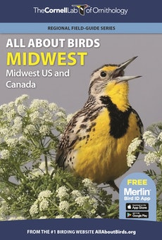 All About Birds Midwest