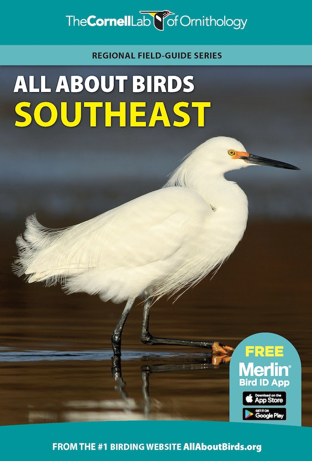 All About Birds Southeast