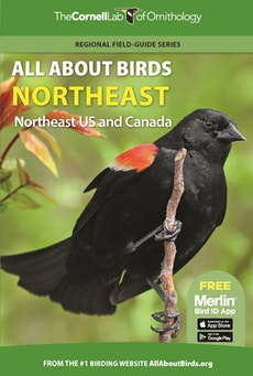 All About Birds Northeast
