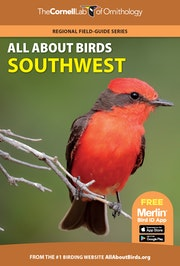 All About Birds Southwest