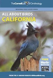 All About Birds California