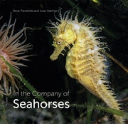 In the Company of Seahorses