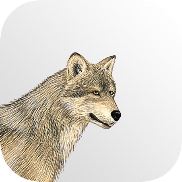 Mammals of North America (App)