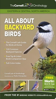 All About Backyard Birds- Eastern & Central North America